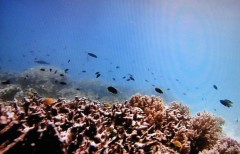 coraux.w.jpg