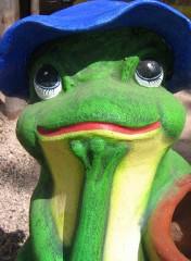 grenouille.2.w.jpg